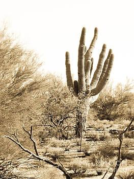 Saguaro by Judi FitzPatrick