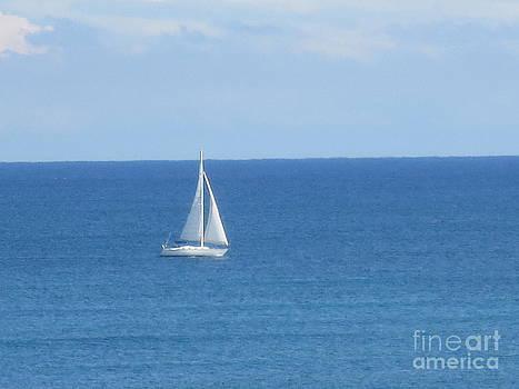 Sail Boat Fla East Coast by Sandra Spincola