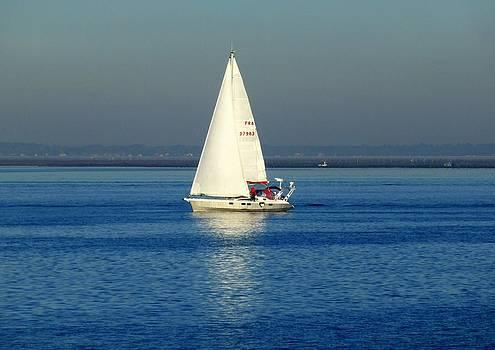 Bishopston Fine Art - Sailing By