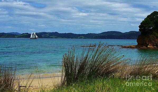 Bay of Islands by Michele Penner