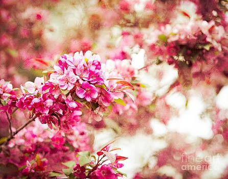 Sonja Quintero - Sakura Spring Tree