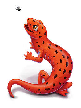 Salamander by Michael Trujillo