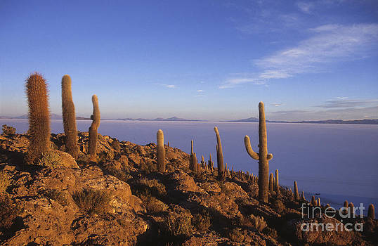 James Brunker - Salar de Uyuni and cacti