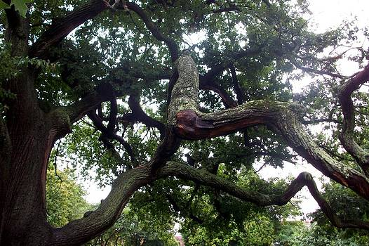 Salem Tree by Bess Yearsley