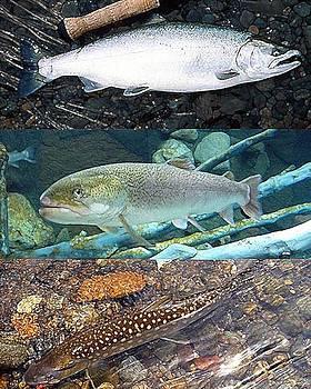 Salmon And Trouts by John Davis