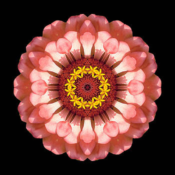 Salmon Zinnia Elegans IV Flower Mandala by David J Bookbinder