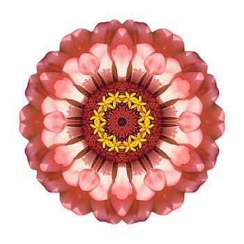 Salmon Zinnia Elegans IV Flower Mandala White by David J Bookbinder