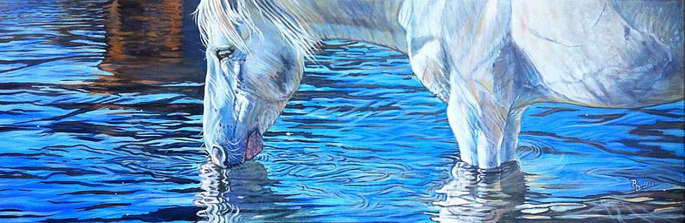 Salt River wild stallion by Rayna DeHoog