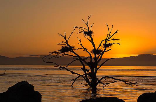 Salton Sea sunset by Jessica Nguyen