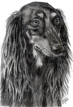 Michelle Wrighton - Saluki Black and White Drawing