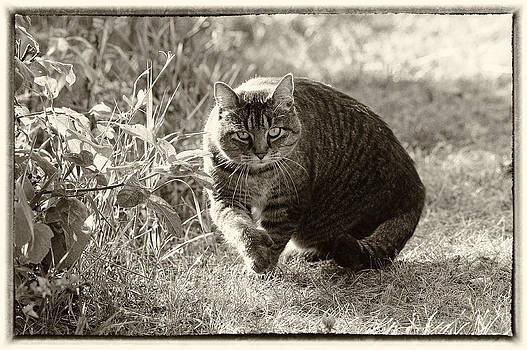 Mary Lee Dereske - Sam the Cat Sepia with border