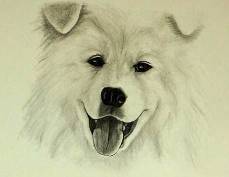 Samoyed Smile by Tanya Arends