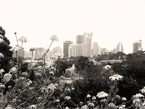 San Diego Cityscape  by William  Dorsett