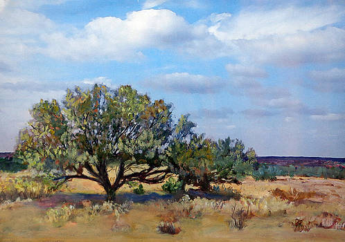 San Pedro Mesquite by Toyah Taylor
