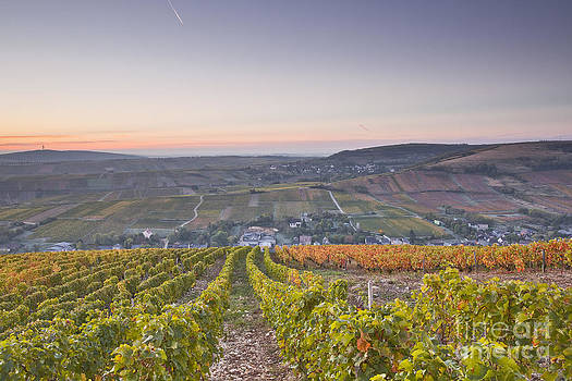 Sancerre vineyards by Julian Elliott