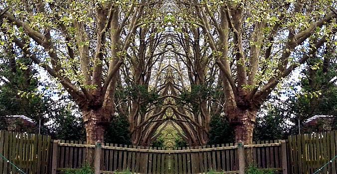 Sanctuary by Julie Dunkley