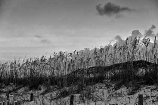 Sand Dunes by Bryan Davis