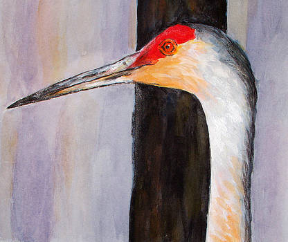 Sand Hill Crane by Suzanne Johnson