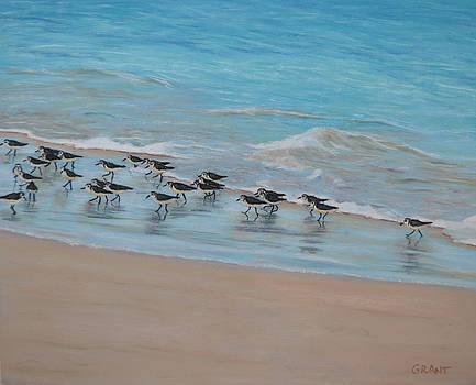 Sand Piper on Parade by Joanne Grant
