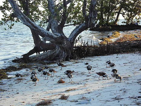Sand Pipers at Beach by Susan Sidorski