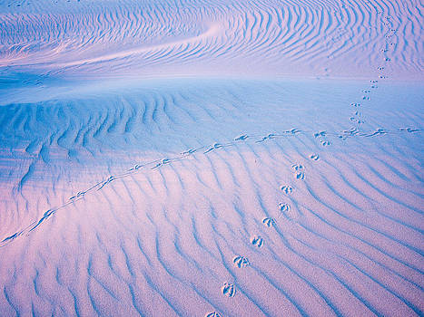 Sand structures shadows and bird traces no1 by Martin Liebermann