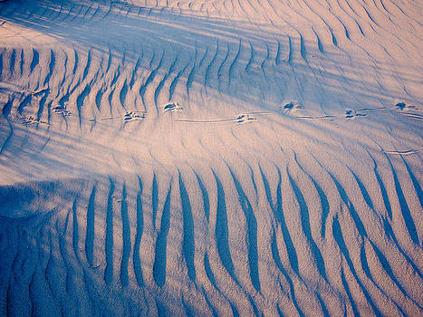 Sand structures shadows and bird traces no2 by Martin Liebermann