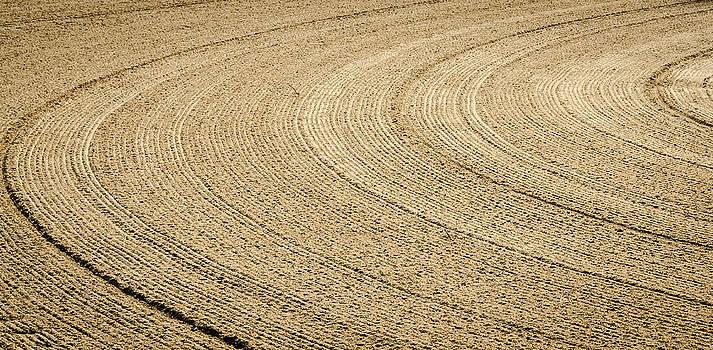 Sand Tracks by Anthony Morganti