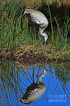 Sandhill Nest Reflection by Larry Nieland