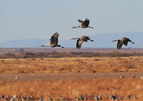 Sandhills At Whitewater Draw by Steve Wolfe