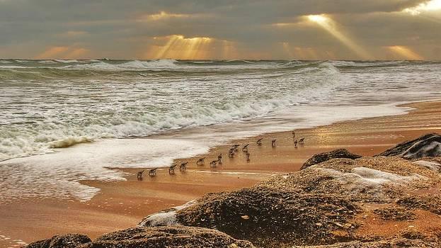 Sandpiper Sunrise by DM Photography- Dan Mongosa
