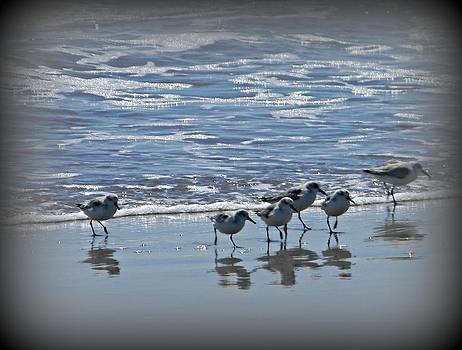 Sandpipers by Diane Valliere