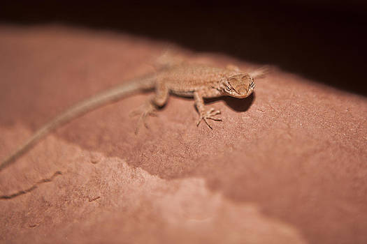 Sandstone Lizard by Joel Moranton