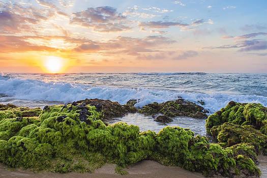 Sandy Beach Sunrise 2 by Leigh Anne Meeks