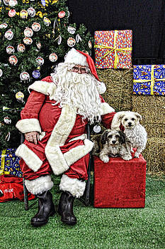 Santa Paws  by Helen Akerstrom Photography