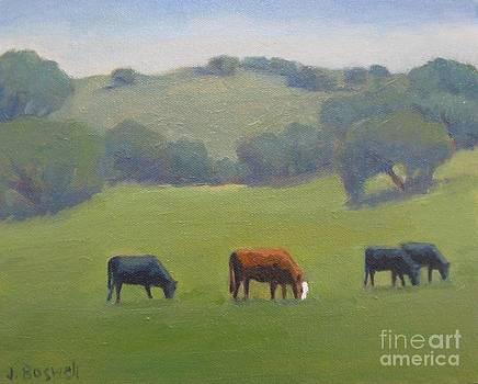 Santa Ynez Cows by Jennifer Boswell