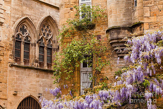 Sarlat wisteria by Julian Elliott