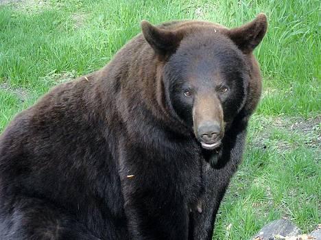 Sayre Black Bear by Jody Benolken