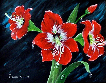 Scarlet Amaryllis by Fram Cama