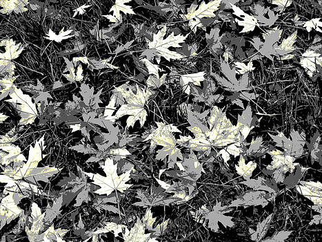 Scattered Leaves in Grayscale by Mariola Szeliga