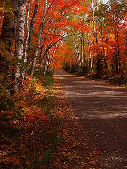 Scenic Maple Drive by James Peterson