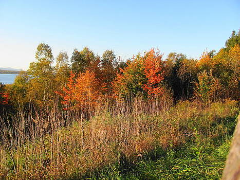 Scenic Turnout in Autumn by Sandra Martin