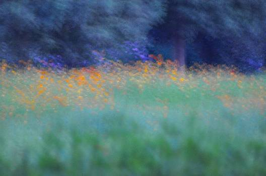 Scent in Motion by Bruce Smith