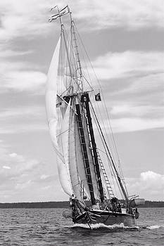 Schooner Lewis French by Colleen Shaw Gleason