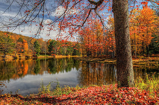 Science Lake Autumn by Terry Cervi