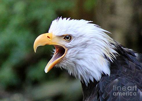 Screaming Eagle by Susan Meade