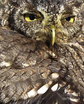 Screech-Owl by Deborah Johnson