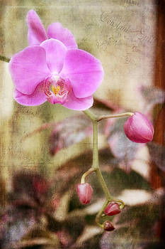 Scripted Orchid by Joan Bertucci