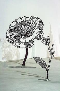 Matt Create - Sculptures and Shadows