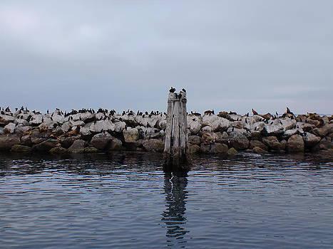 Sea Birds by Keeza Starr