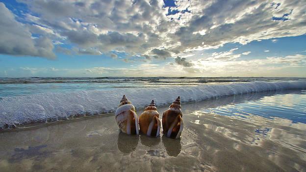 Sea Crown Jewels by DM Photography- Dan Mongosa